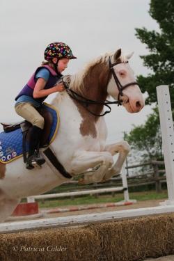 Horses-PatriciaCalder-59
