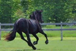 Horses-PatriciaCalder-6
