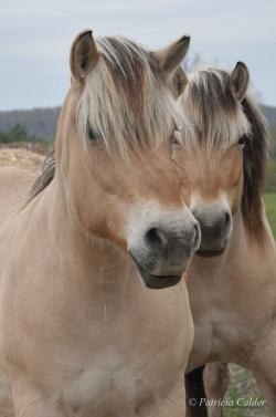 Horses-PatriciaCalder-60