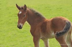 Horses-PatriciaCalder-62