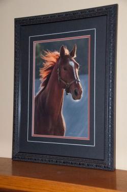 Horses-PatriciaCalder-64