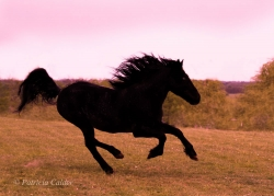 Horses-PatriciaCalder-65