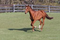 Horses-PatriciaCalder-66