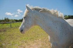 Horses-PatriciaCalder-68