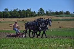 Horses-PatriciaCalder-8