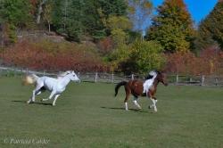 Horses-PatriciaCalder-9