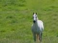 Horses-PatriciaCalder-46