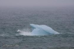 Icebergs-PatriciaCalder-2014-02