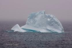 Icebergs-PatriciaCalder-2014-06