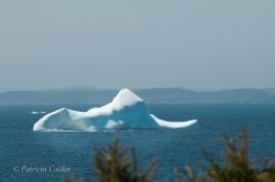 Icebergs-PatriciaCalder-2014-12