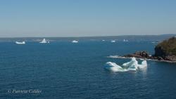 Icebergs-PatriciaCalder-2014-13