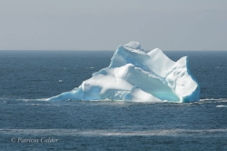 Icebergs-PatriciaCalder-2014-15