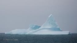 Icebergs-PatriciaCalder-2014-23