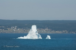 Icebergs-PatriciaCalder-2014-24