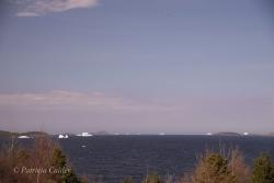 Icebergs-PatriciaCalder-2014-27