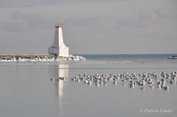 Lighthouses-PatriciaCalder-24