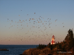 Lighthouses-PatriciaCalder-9