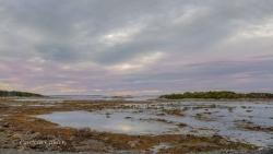 Newfoundland-PatriciaCalder-13
