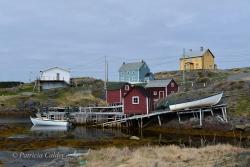 Newfoundland-PatriciaCalder-15