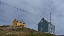 Newfoundland-PatriciaCalder-17