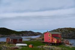 Newfoundland-PatriciaCalder-18