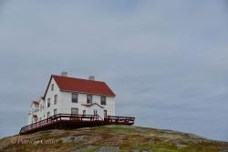 Newfoundland-PatriciaCalder-20