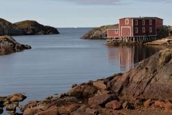 Newfoundland-PatriciaCalder-24