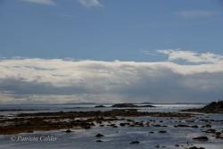 Newfoundland-PatriciaCalder-29
