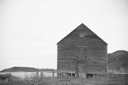 Newfoundland-PatriciaCalder-33