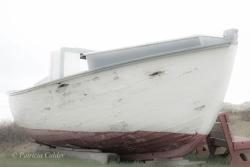 Newfoundland-PatriciaCalder-35