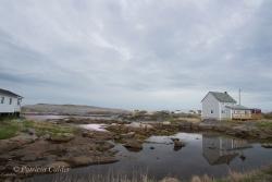 Newfoundland-PatriciaCalder-38
