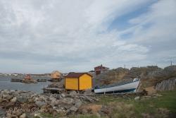 Newfoundland-PatriciaCalder-39
