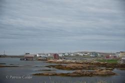 Newfoundland-PatriciaCalder-40