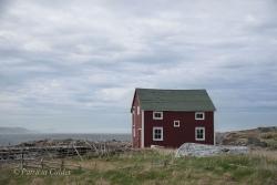 Newfoundland-PatriciaCalder-41