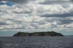 Newfoundland-PatriciaCalder-45