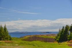 Newfoundland-PatriciaCalder-8