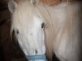 Ponies-PatriciaCalder-18