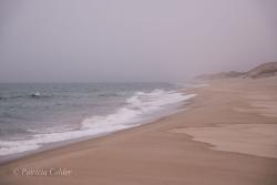 Sable-Island-PatriciaCalder-26